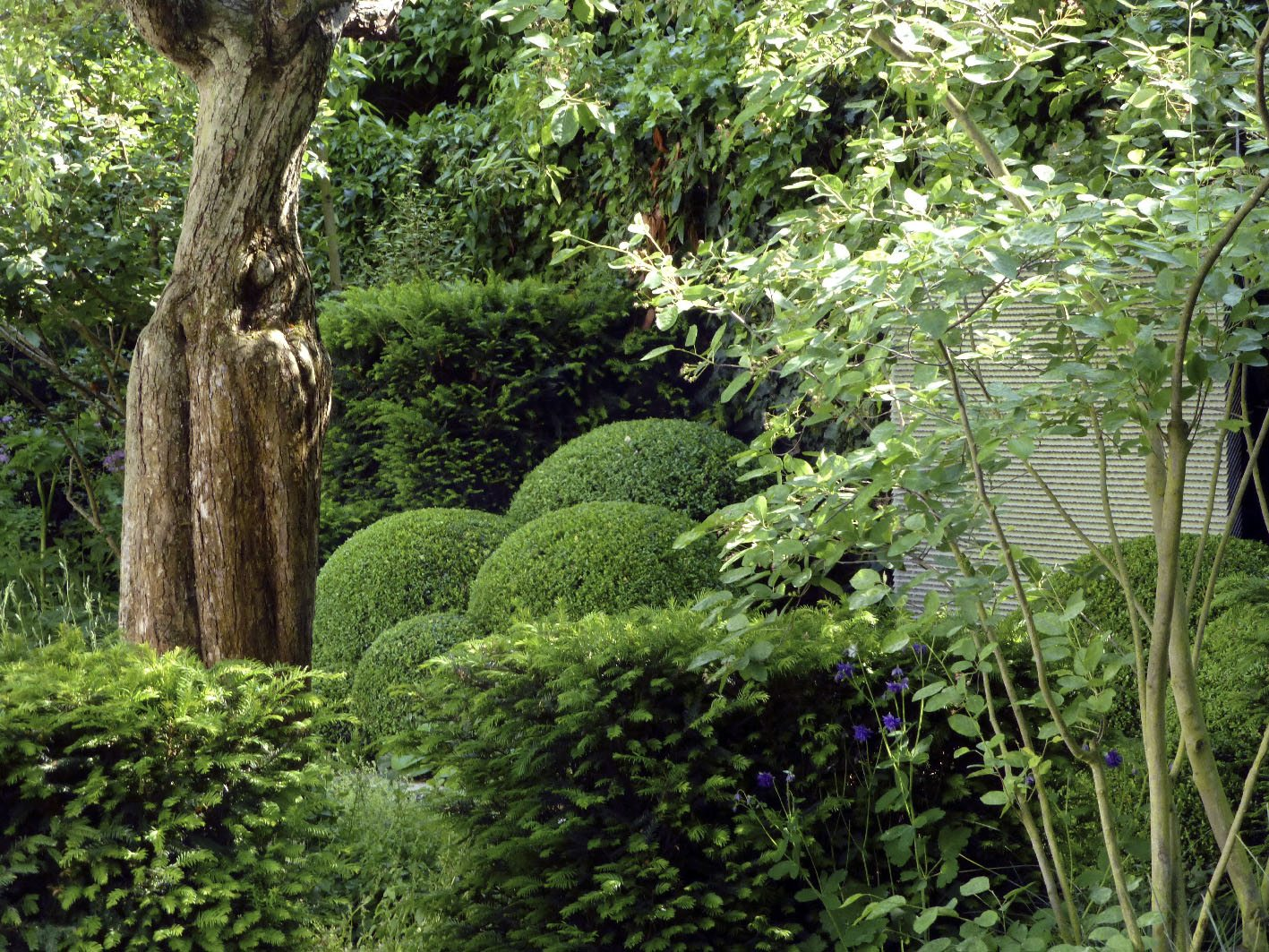 A garden with del Buono Gazerwitz Ltd